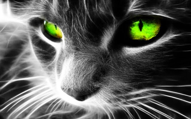 CAT – Protects You And Your Home From Ghosts And Negative