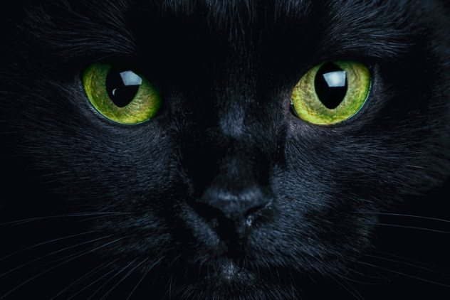Have You Been Seeing Black Cats What The Black Cat Symbolizes More
