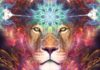 8/8 Lions Gate Portal Opening: Be Prepared To Experience A Shift In Your Human Form
