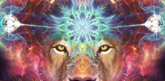 The Lionsgate Portal Opens Today: One Of The Luckiest Days For Manifestation