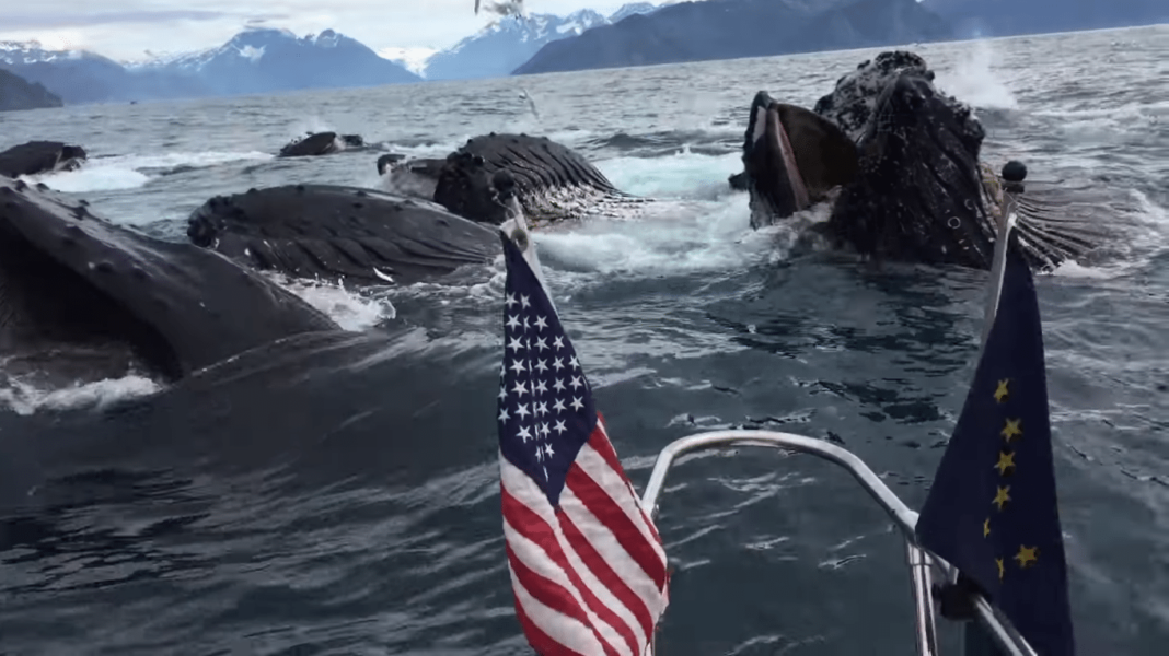 Man Captures Once In A Lifetime Sight While Whale-Watching