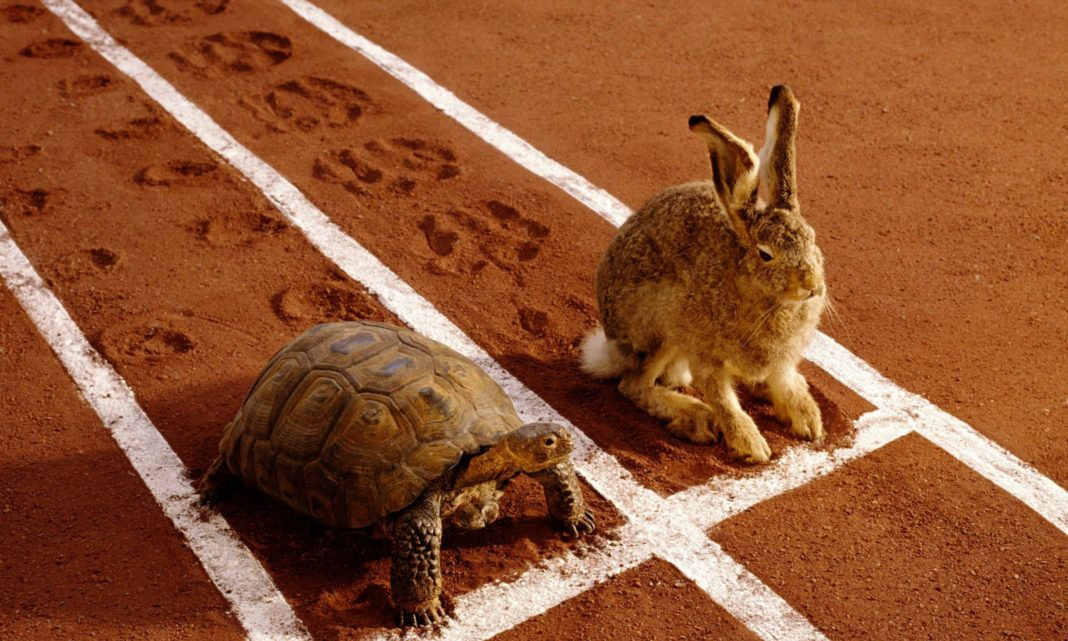 The Tortoise Mindset: How Slow & Steady Will Make You The Winner