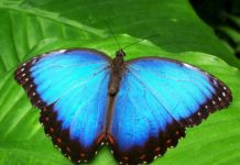 Butterflies Are Spiritual Messengers: Here's What They Mean For You
