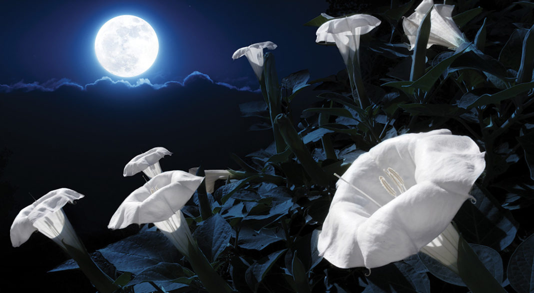 The Meaning Behind The Name Of The May's Flower Full Moon