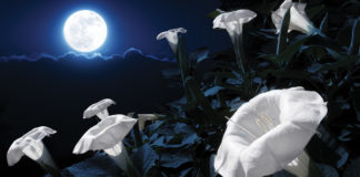 Tonight's Powerful Flower Supermoon Will Push Everyone Into Emotional Overdrive
