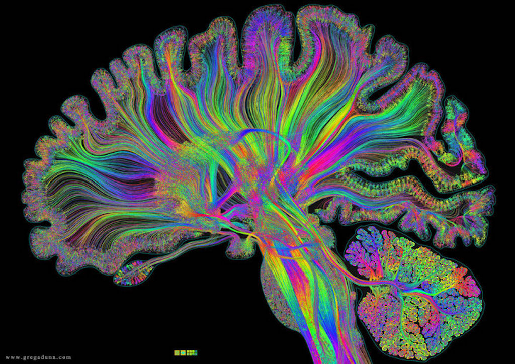 10 Things You Didn't Know About The Human Brain And Its Capabilities