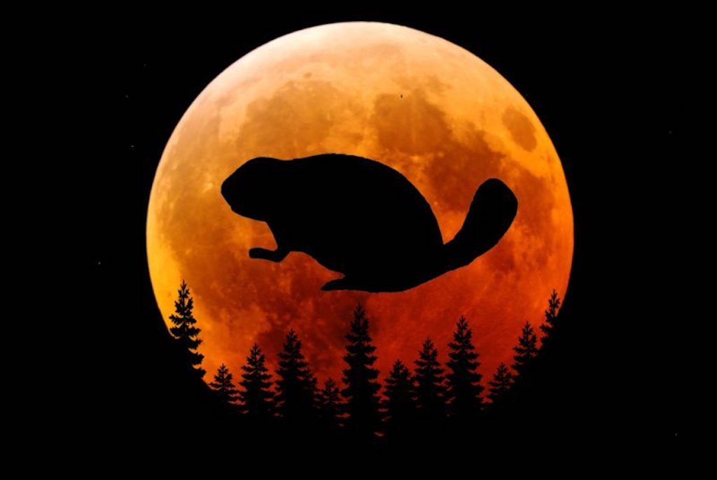 Today's Beaver Moon In Taurus Is The Most Positive One Of 2019: Expect Your Dreams To Come True