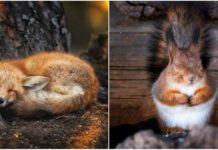Finnish Photographer Uses His Camera To Prove Finland Has Real Fairy Forests