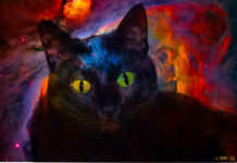Magnificent CATS – Protect You And Your Home From Ghosts And Negative Spirits