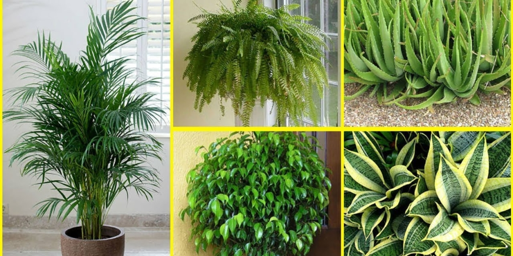 According to NASA These 7 Plants Are Oxygen Bombs — Use At Least One Of Them To Clean The Air At Home And Feel The Difference