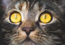 Do Your Cat's Purrs Have Healing Abilities?
