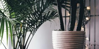 According To NASA These 5 Plants Are Oxygen Bombs — Use At Least One Of Them To Clean The Air At Home And Feel The Difference