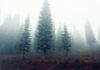 Evergreen Tree Symbolism: Endurance & Perseverance