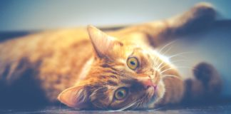 Owning A Cat — Scientifically Proven To Be Good For Your Health