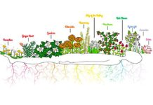 How Herbs & Plants Can Help Your Unblock Your Seven Chakras