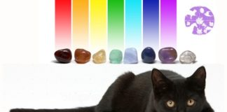 How To Use Crystals On Your Pets To Keep Them Happy & Healthy