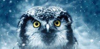 Spiritual Meaning Of Owls