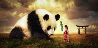 Having A Panda For A Spirit Animal: This Is What You Need To Pay Attention To