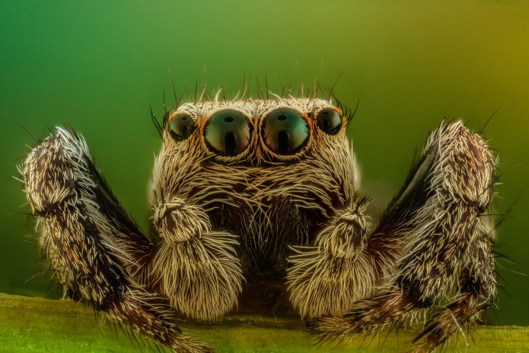 If You Have A Spider For A Spirit Animal, Maybe You Need To Accept Your Dark Side