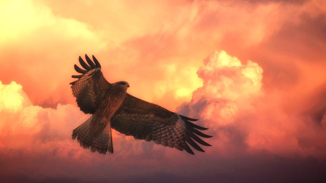 The Hawk As Your Spirit Animal – Only The Sky Is The Limit