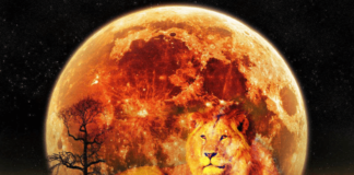 Fiery New Moon In Leo Rises August 18th: Releasing The Shadows
