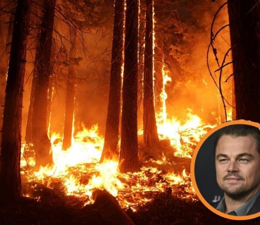 Leonardo DiCaprio Makes An Urgent Call To Save The Amazon Rainforest