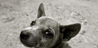 People In Brazil Who Adopt Stray Dogs Or Plant Trees Can Get Tax Breaks